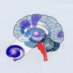 Εγκέφαλος14