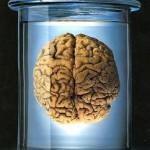 Εγκέφαλος9