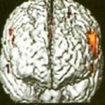 Νευρικο-σύστημα-και-ομοιόσταση