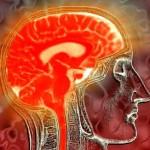 εγκεφαλος.jpg