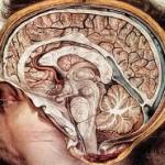 Εγκέφαλος2