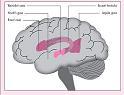 Landau-Kleffner-Syndrome