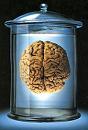 Εγκέφαλος21