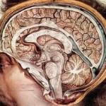 stres-koyrasi-loimoxeis-aftoanosa1