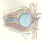 Όγκος οφθαλμικού κόγχου